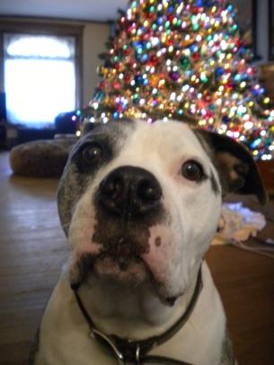 Bosco's first holiday photo shoot.