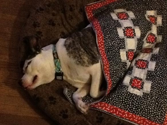 downstairs blanket